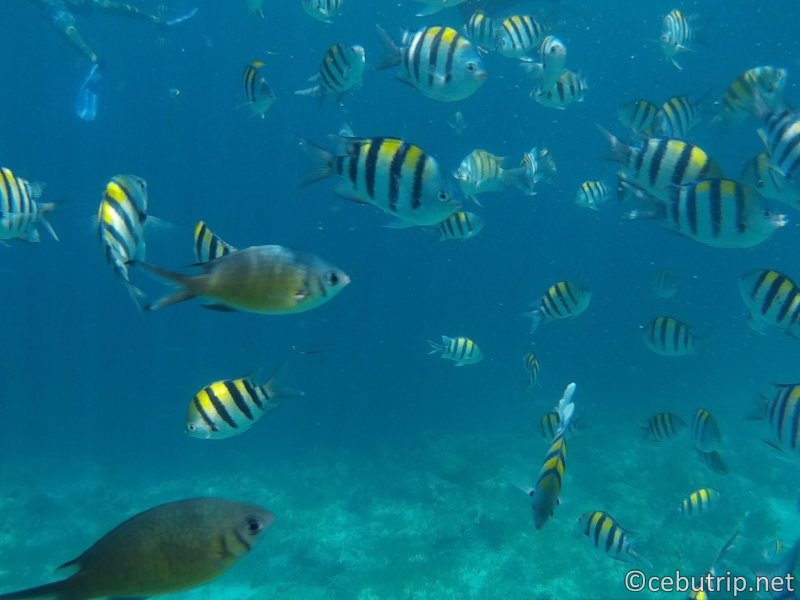«Cheap! バ ナ ナ A banana boat and speed boat go! Orango Island tour