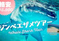 Affordable Whale Shark Tour in Oslob Cebu with FREE pick-up!!