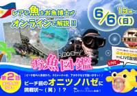 セブ島オンラインツアー2|レアな魚をお魚博士がオンラインで解説!