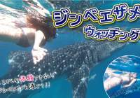 Whale sharks and the best memories! Cheap Oslob day tour!