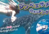 【格安】ジンベエザメと最高の思い出を!大迫力のオスロブ日帰りツアー!
