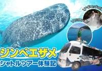 The Cheapest Whale shark tour!!   Why not go to Oslob!?