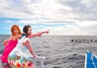 【ボホール】野生のイルカの群れに大興奮!「イルカウォッチング」!