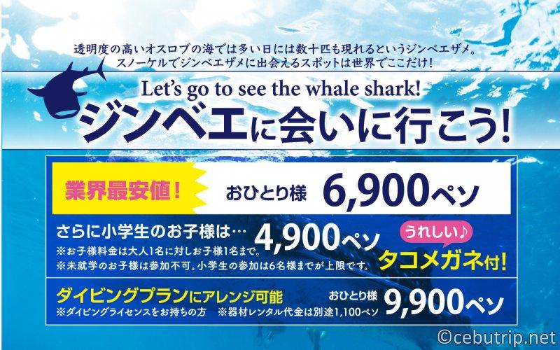 ジンベエザメに会いに行こう!業界最安値!!ジンベエシャトルツアー!!セブ島・オスロブ・スミロン・アギニットの滝【安心の日本語スタッフ&特典付き‼】