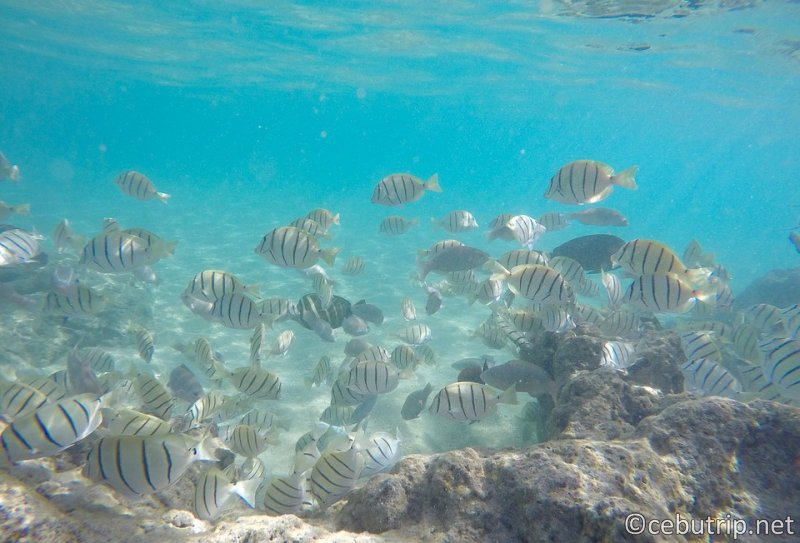 [Discount Island Tour] Enjoy snorkeling at Solpa Island & San Vicente!