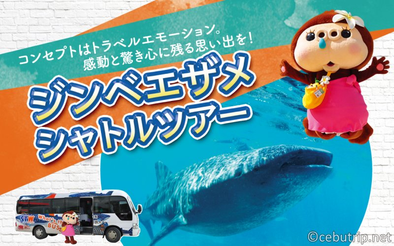 ジンベエザメに会いに行こう!業界最安値!!海も滝も楽しめる「ジンベエザメツアー」!