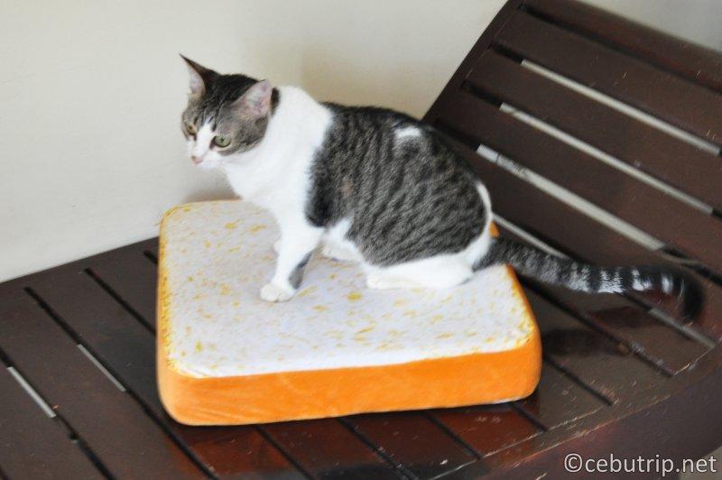 猫用もちもちクッション セブ島で通販LAZADA