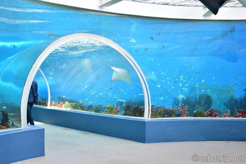 フィリピン最大級の水族館がセブにNEW OPEN!!Cebu Ocean Park