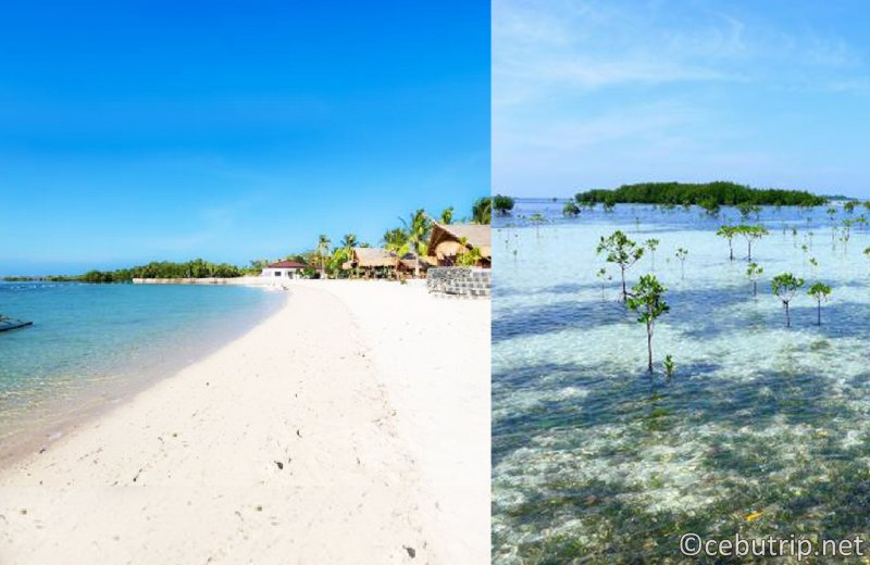 """The most popular package tour in Cebu """"Experience Diving"""" + """"Snorkeling"""" + """"Yakiniku"""" + """"Spa"""" is a great package tour!"""