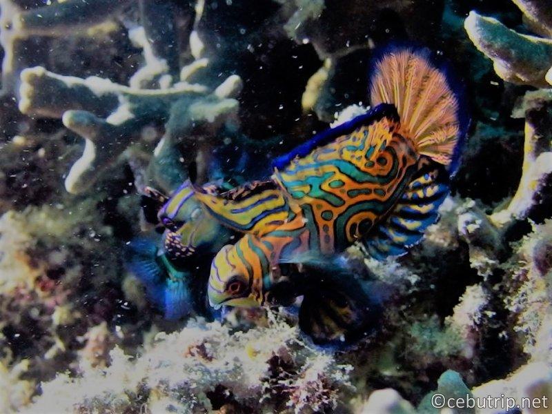 ダイバーの楽園マラパスクア島