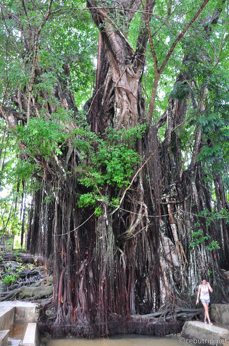 欧米人の観光客や移住者が急増中の魔女が住む島「シキホール」の魅力 バルテの樹