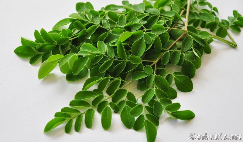 おすすめ土産。セブ島だから買える「奇跡の木」モリンガパウダーと天然ココナッツ石鹸!