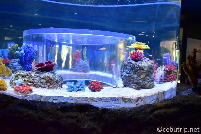 The Largest Oceanarium in the Philippines Opens in Cebu!!
