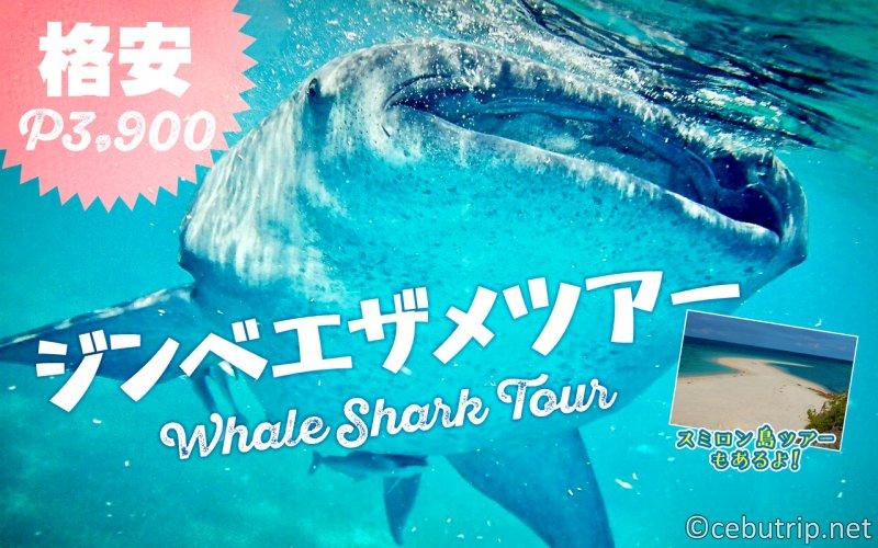 【格安ジンベイザメツアー!】日本人経営で安心!マクタン・セブ島送迎無料