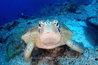 ブルーコーラル (BLUE CORAL scuba diving tour and school) #11