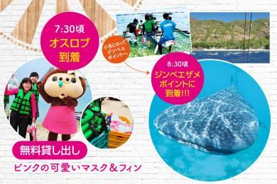 ジンベエザメに会いに行こう!業界最安値!!海も滝も楽しめる「ジンベエザメツアー」! #3
