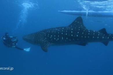 ブルーコーラル (BLUE CORAL scuba diving tour and school) #