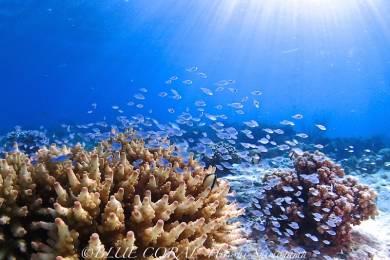 ブルーコーラル (BLUE CORAL scuba diving tour and school) #4