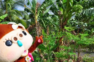 おすすめ土産。セブ島だから買える「奇跡の木」モリンガパウダーと天然ココナッツ石鹸! #1