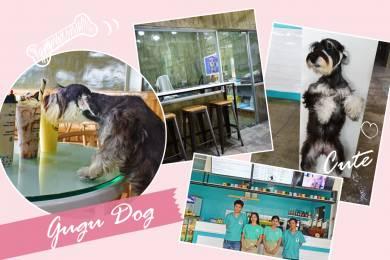 GUGU DOG(グゥグゥドッグ) #
