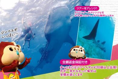 ジンベエザメに会いに行こう!業界最安値!!海も滝も楽しめる「ジンベエザメツアー」! #4