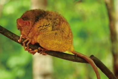 【ボホール】「絶景チョコレートヒルズ」「最小メガネザルのターシャ」「ロボック川のリバークルーズ」 #3