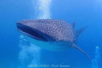 ブルーコーラル (BLUE CORAL scuba diving tour and school) #10